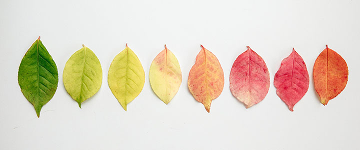 header_flat-lay-of-autumn-leaves-changing-color